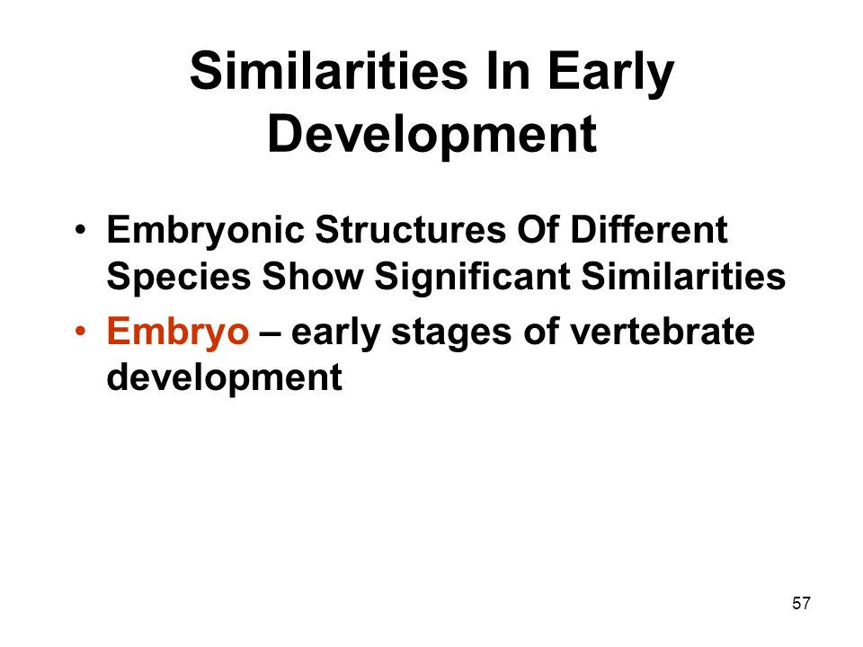 57 Similarities In Early Development Embryonic Structures Of Different Species Show Significant Similarities Embryo – early stages of vertebrate devel