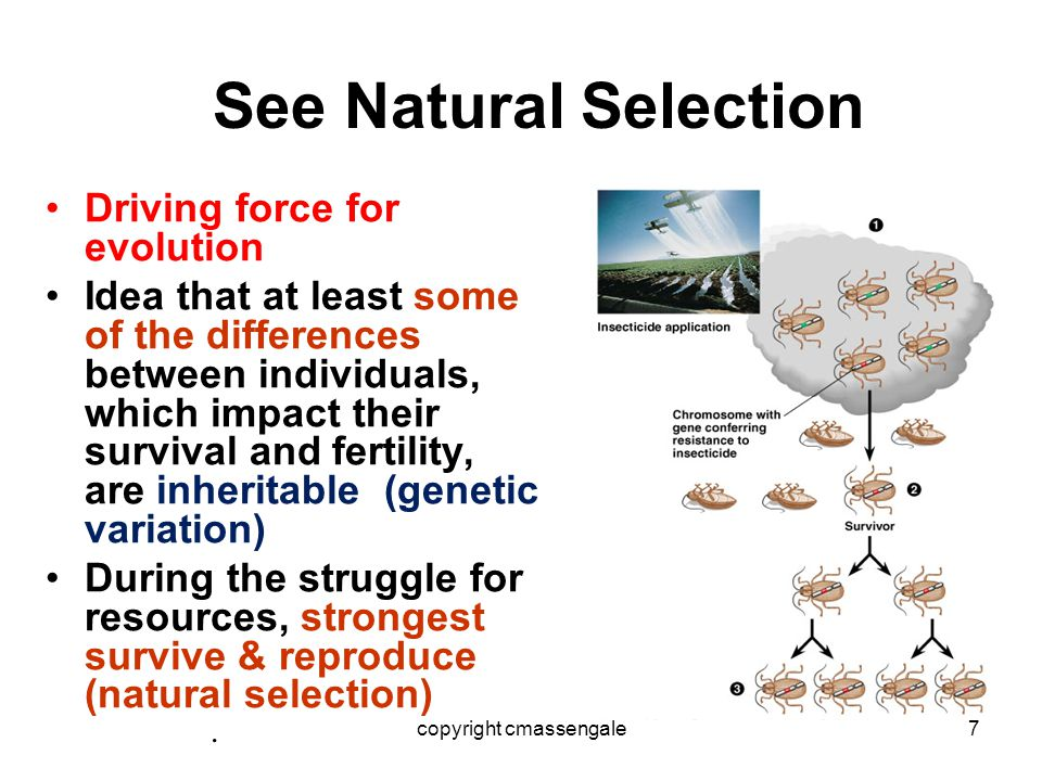 ARTIFICIAL SELECTION WORKS In artificial selection, ____________ provides the _________ through _________ and _________________ and ______________ those traits that they find ______.