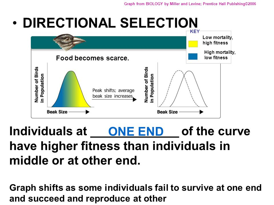 DIRECTIONAL SELECTION Graph from BIOLOGY by Miller and Levine; Prentice Hall Publshing©2006 Individuals at _____________ of the curve have higher fitn