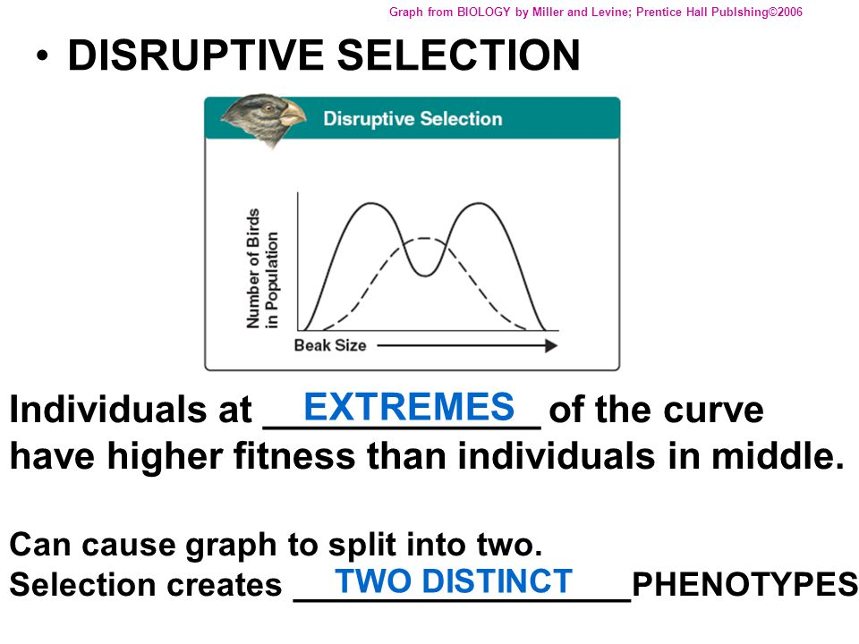 DISRUPTIVE SELECTION Graph from BIOLOGY by Miller and Levine; Prentice Hall Publshing©2006 Individuals at _____________ of the curve have higher fitne