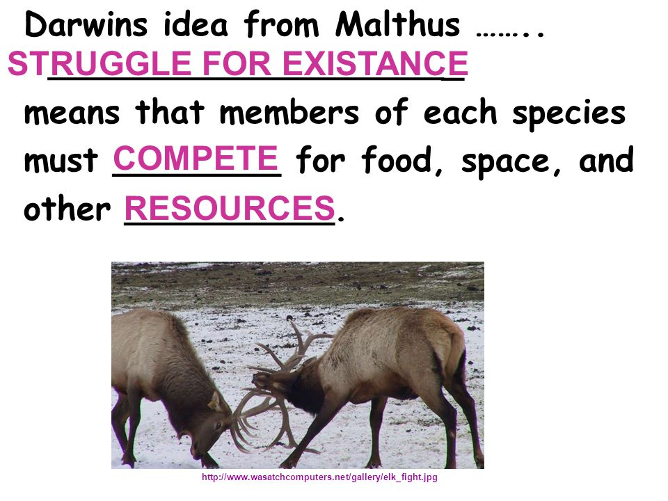 Darwins idea from Malthus …….. _____________________ _ means that members of each species must ________ for food, space, and other __________. http://
