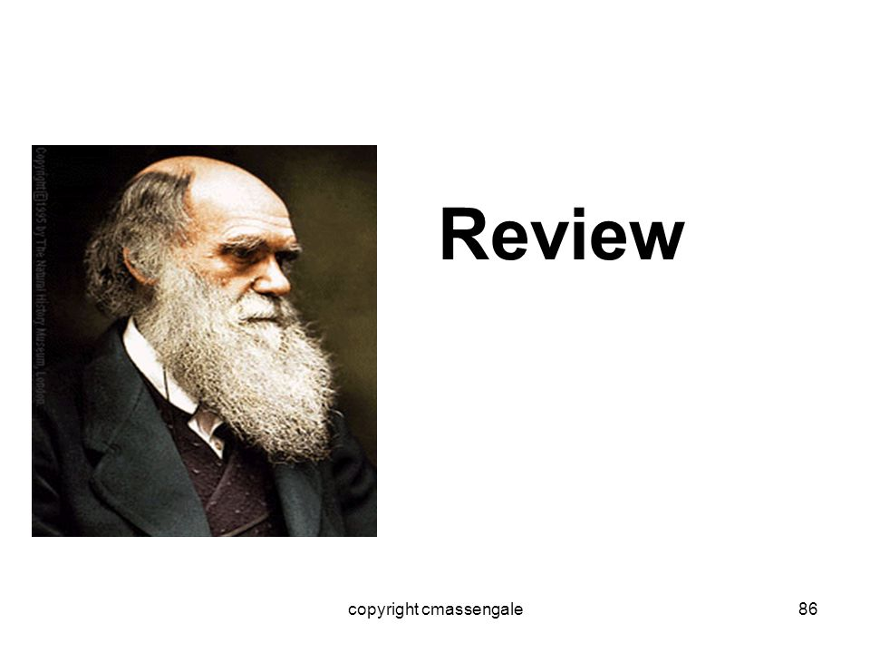 86 Review copyright cmassengale