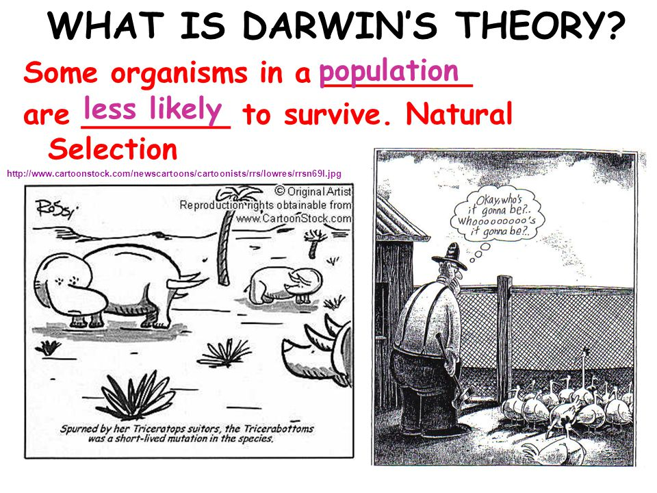 90 Darwin s Theory 7.Species Alive Today Have Descended With Modifications From Species That Lived In The Past 8.All Organisms On Earth Are United Into A Single Tree Of Life By Common Descent copyright cmassengale