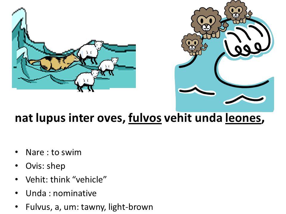 nat lupus inter oves, fulvos vehit unda leones, Nare : to swim Ovis: shep Vehit: think vehicle Unda : nominative Fulvus, a, um: tawny, light-brown