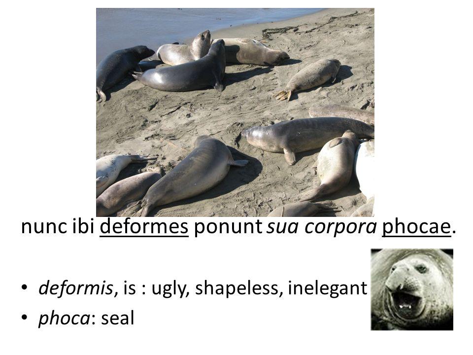 nunc ibi deformes ponunt sua corpora phocae. deformis, is : ugly, shapeless, inelegant phoca: seal