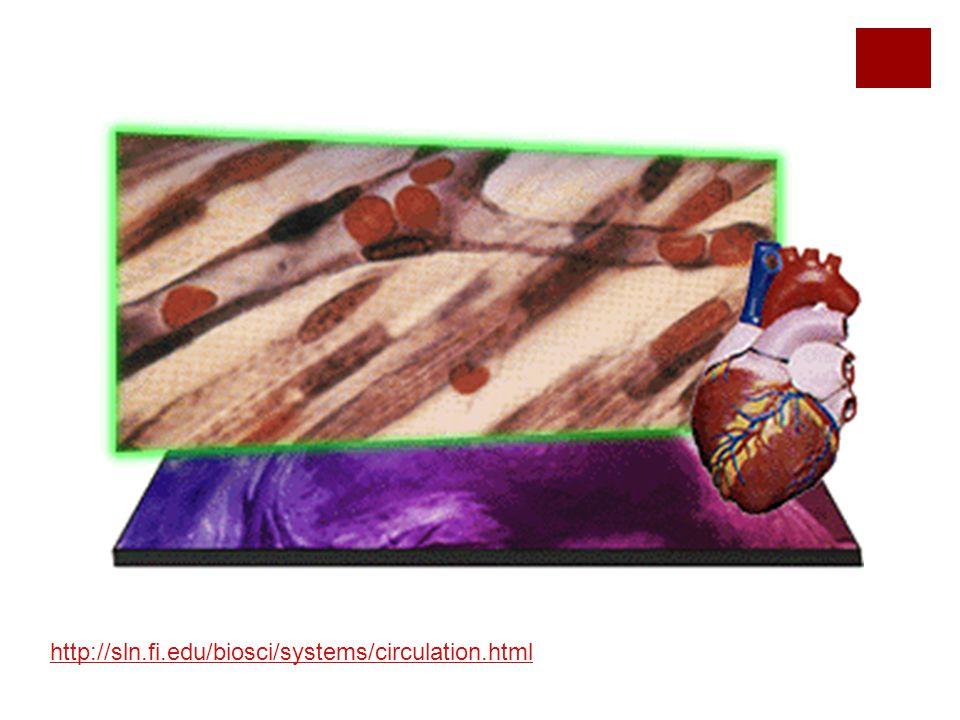 http://sln.fi.edu/biosci/systems/circulation.html