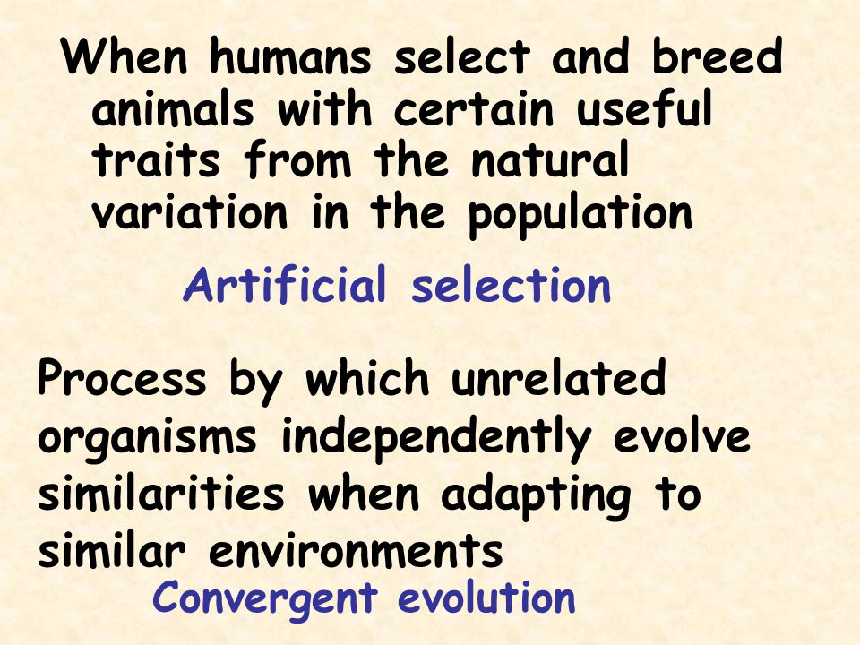 When humans select and breed animals with certain useful traits from the natural variation in the population Artificial selection Process by which unr