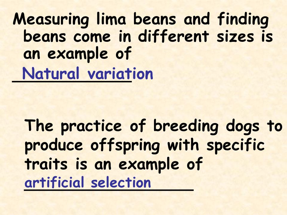 Measuring lima beans and finding beans come in different sizes is an example of ____________ Natural variation The practice of breeding dogs to produc