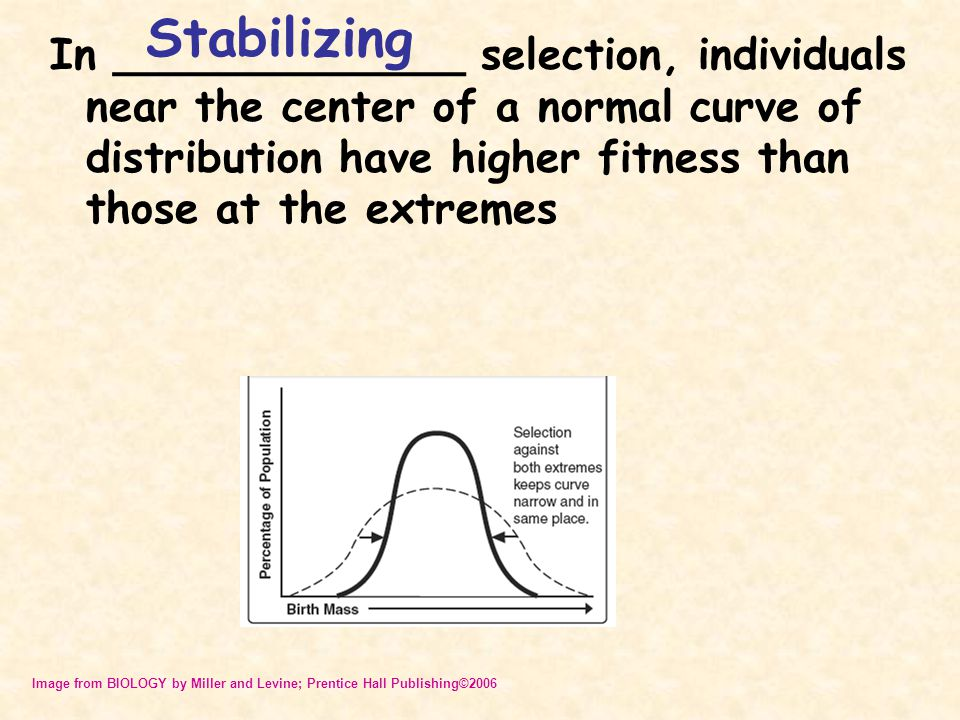 In _____________ selection, individuals near the center of a normal curve of distribution have higher fitness than those at the extremes Stabilizing I