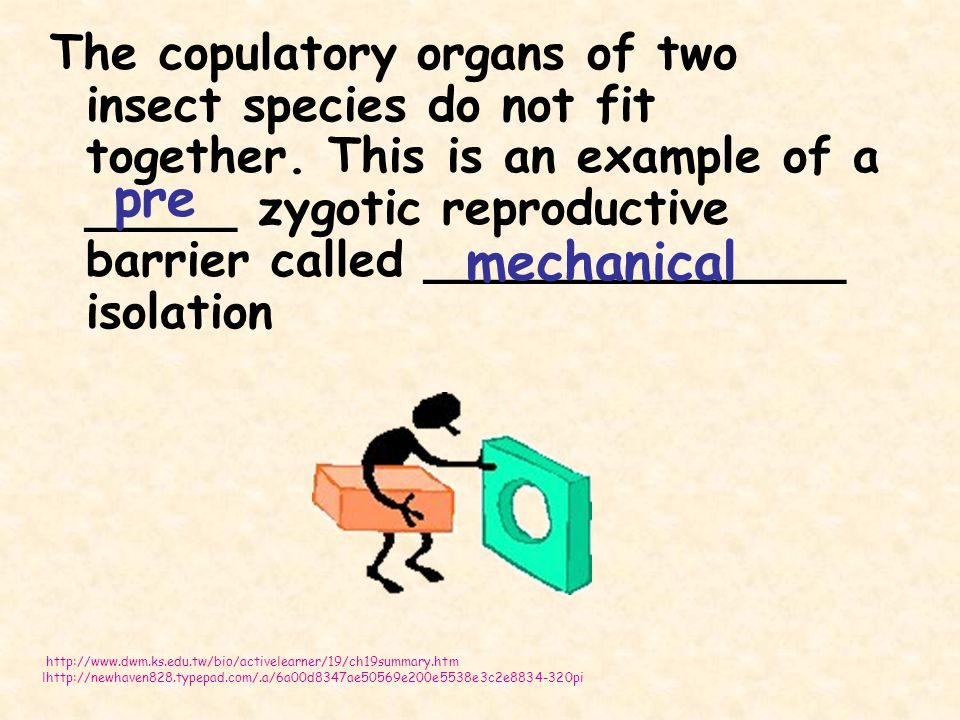 The copulatory organs of two insect species do not fit together. This is an example of a _____ zygotic reproductive barrier called ______________ isol