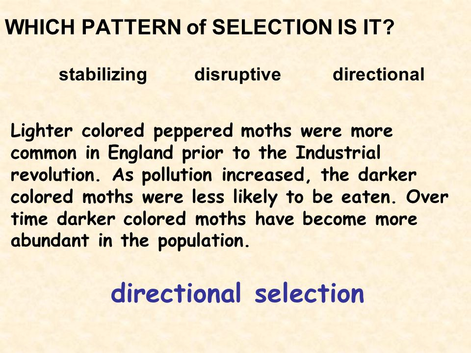 WHICH PATTERN of SELECTION IS IT? stabilizing disruptive directional directional selection Lighter colored peppered moths were more common in England