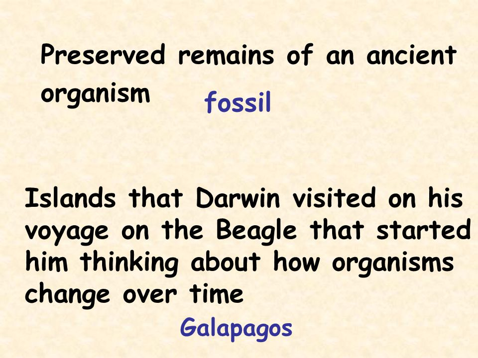 Preserved remains of an ancient organism fossil Islands that Darwin visited on his voyage on the Beagle that started him thinking about how organisms