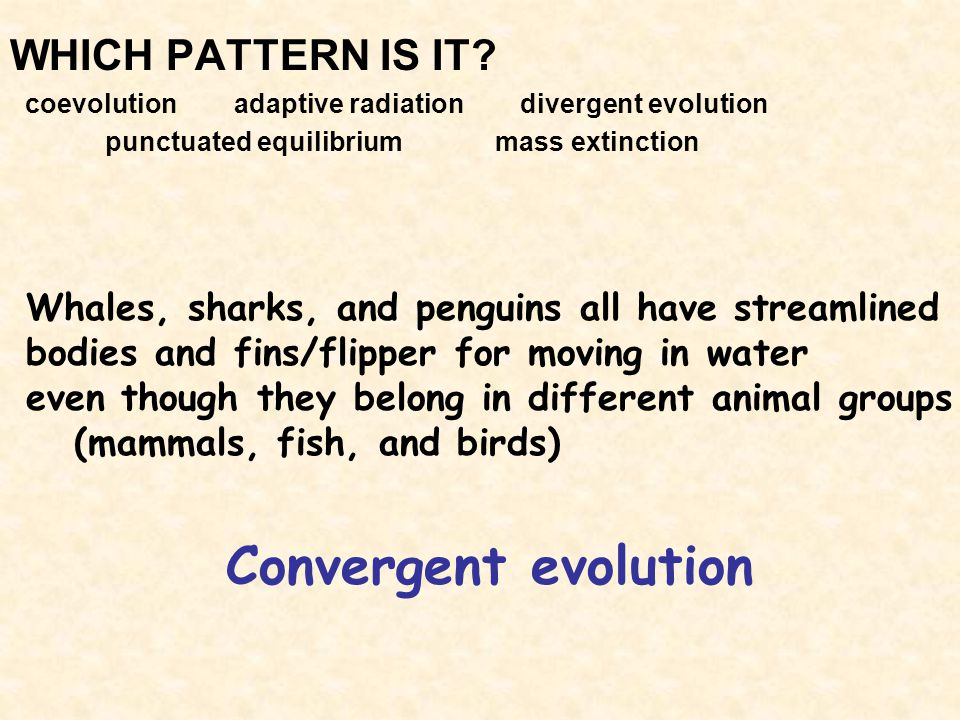WHICH PATTERN IS IT? coevolution adaptive radiation divergent evolution punctuated equilibrium mass extinction Convergent evolution Whales, sharks, an