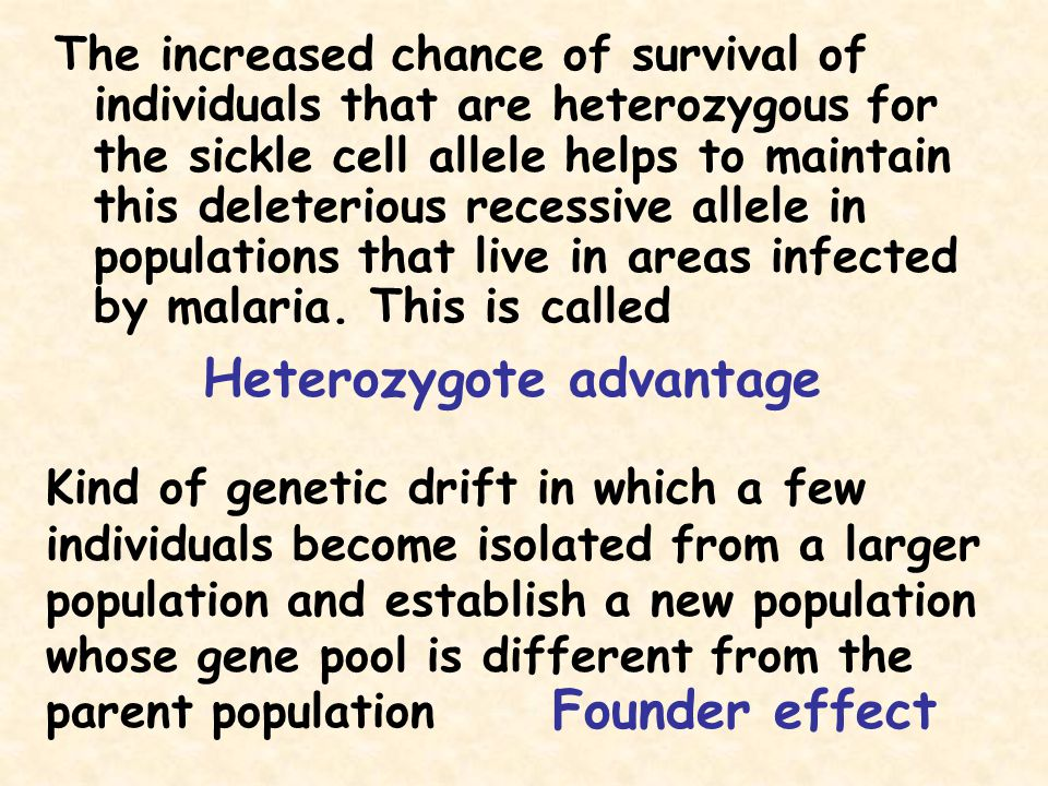The increased chance of survival of individuals that are heterozygous for the sickle cell allele helps to maintain this deleterious recessive allele i