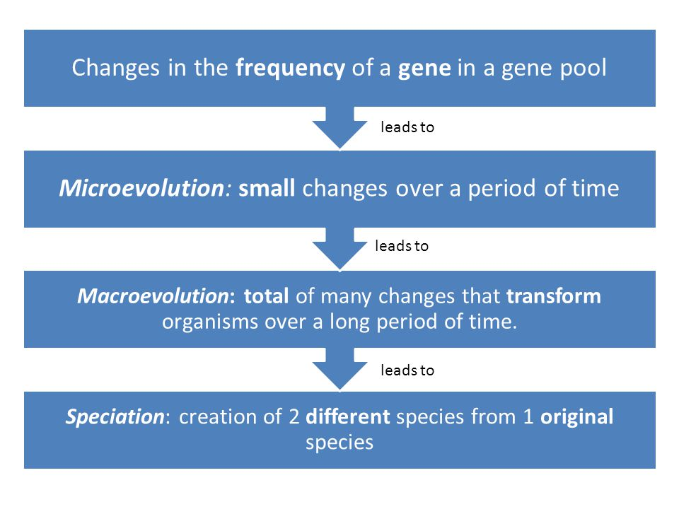 Speciation: creation of 2 different species from 1 original species Macroevolution: total of many changes that transform organisms over a long period of time.