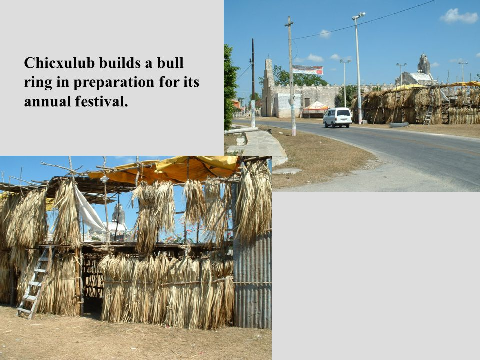 Chicxulub builds a bull ring in preparation for its annual festival.
