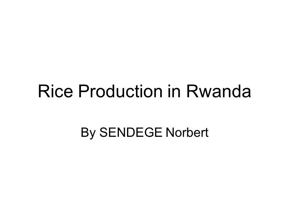 Rice Production in Rwanda By SENDEGE Norbert
