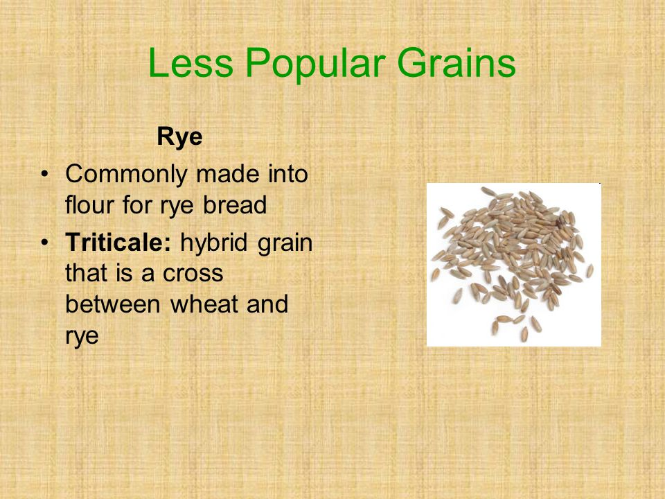 Rye Commonly made into flour for rye bread Triticale: hybrid grain that is a cross between wheat and rye