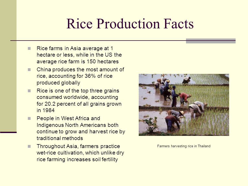 Rice Production Facts Rice farms in Asia average at 1 hectare or less, while in the US the average rice farm is 150 hectares China produces the most a