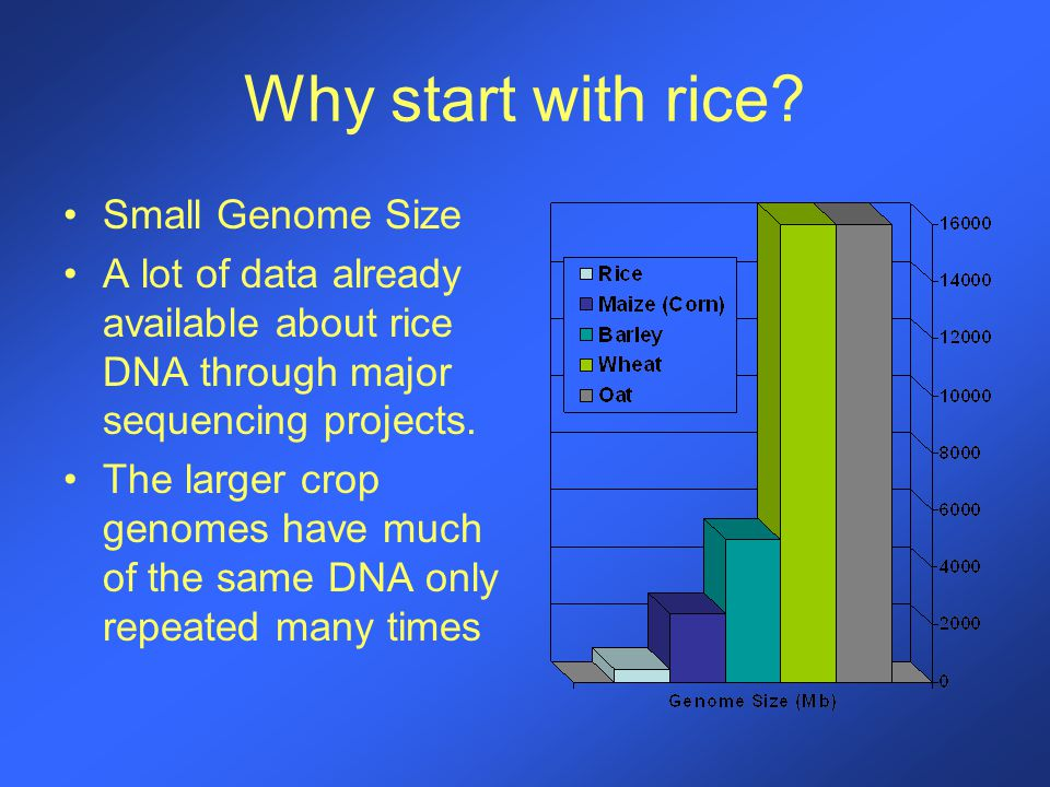 Why start with rice.