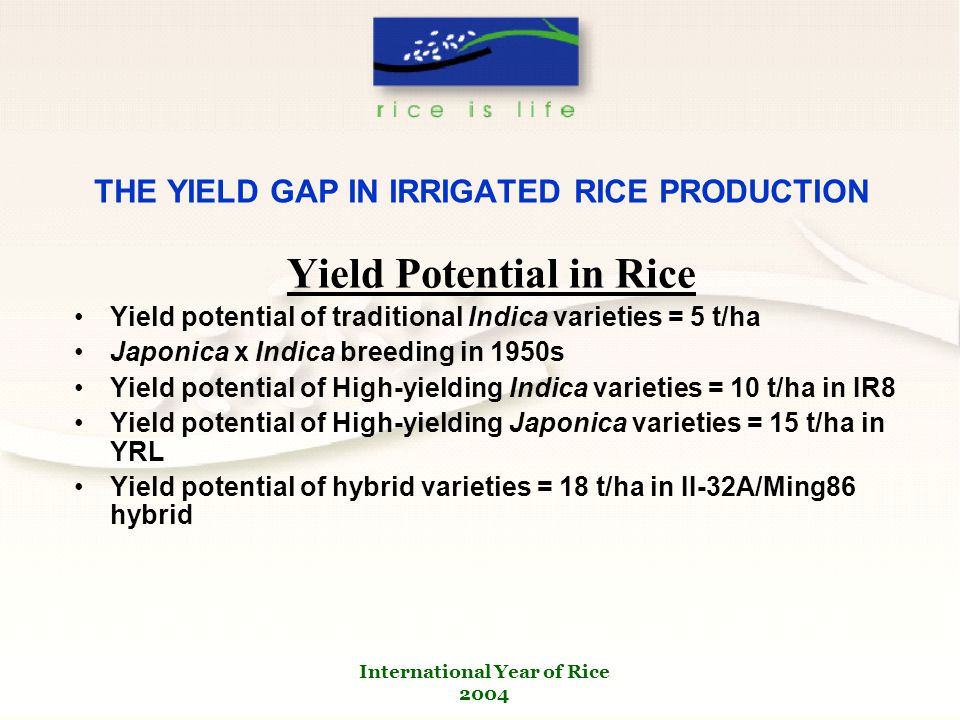 International Year of Rice 2004 THE YIELD GAP IN IRRIGATED RICE PRODUCTION Yield Potential in Rice Yield potential of traditional Indica varieties = 5 t/ha Japonica x Indica breeding in 1950s Yield potential of High-yielding Indica varieties = 10 t/ha in IR8 Yield potential of High-yielding Japonica varieties = 15 t/ha in YRL Yield potential of hybrid varieties = 18 t/ha in II-32A/Ming86 hybrid