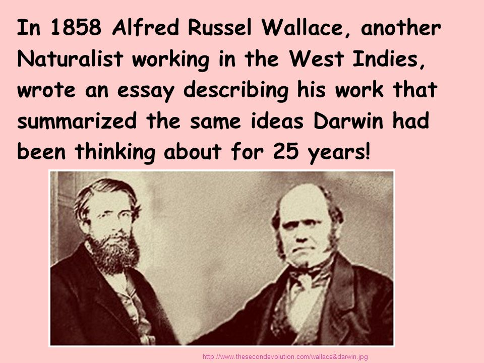 In 1858 Alfred Russel Wallace, another Naturalist working in the West Indies, wrote an essay describing his work that summarized the same ideas Darwin