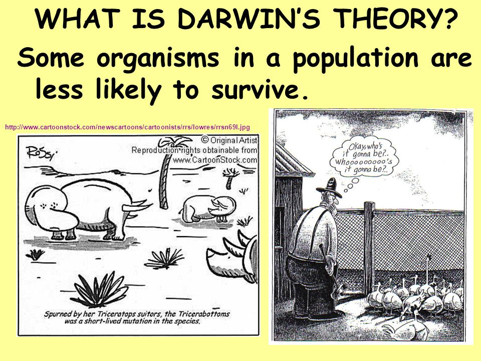 WHAT IS DARWIN'S THEORY? Some organisms in a population are less likely to survive. http://www.cartoonstock.com/newscartoons/cartoonists/rrs/lowres/rr