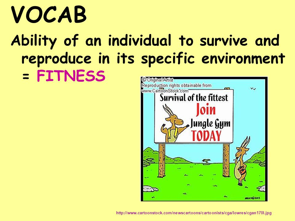 VOCAB Ability of an individual to survive and reproduce in its specific environment = FITNESS http://www.cartoonstock.com/newscartoons/cartoonists/cga