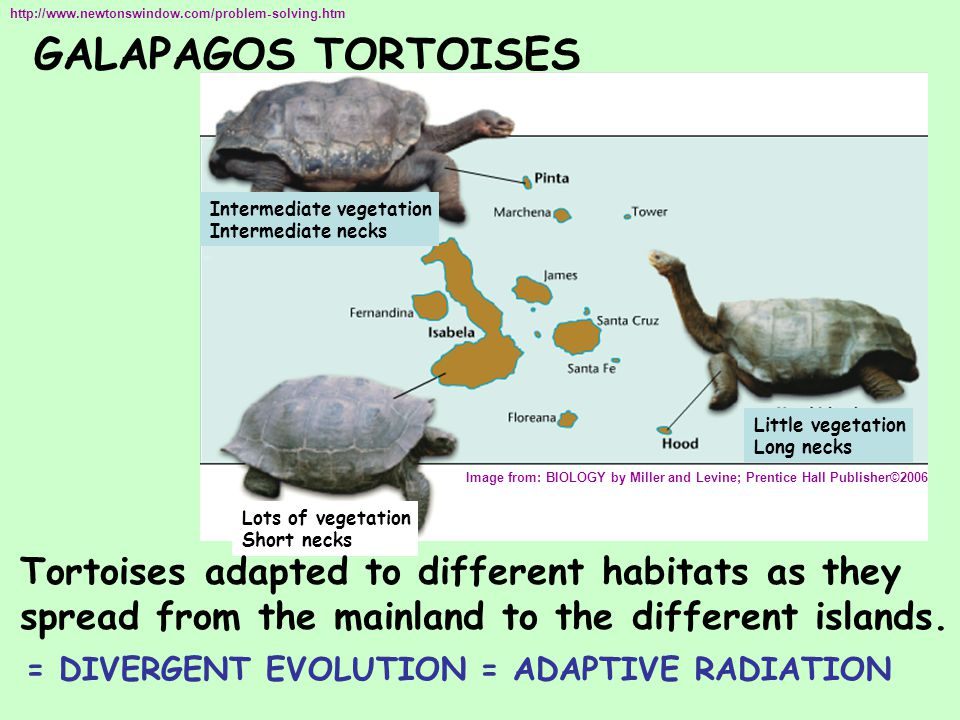 GALAPAGOS TORTOISES http://www.newtonswindow.com/problem-solving.htm Image from: BIOLOGY by Miller and Levine; Prentice Hall Publisher©2006 Little veg