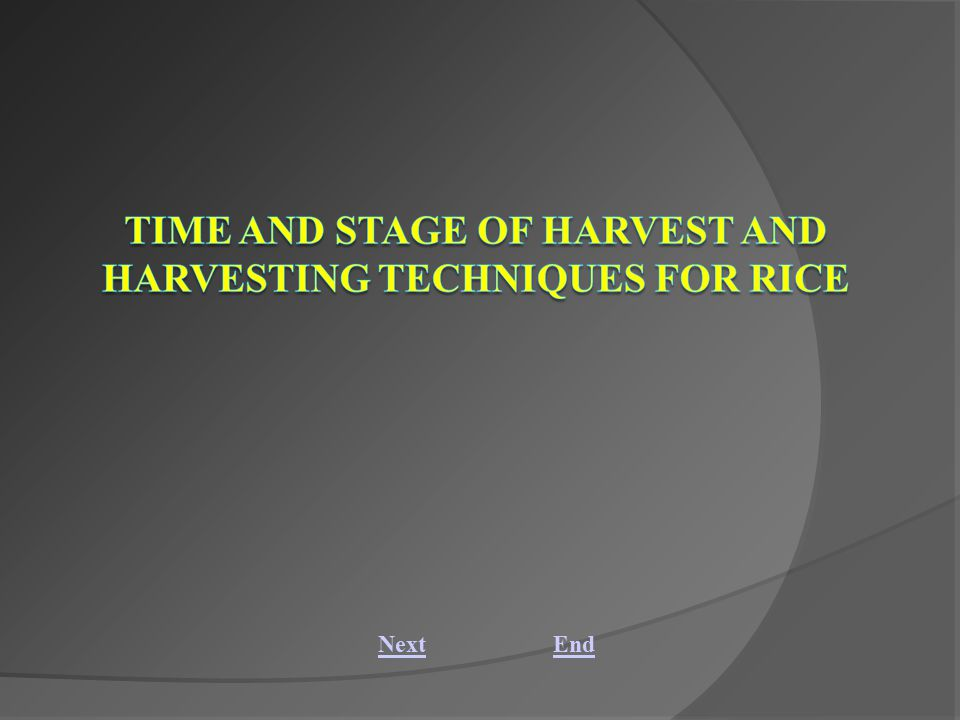 Time and stage of harvest and harvesting techniques for rice Abstract: Identification of maturity and correct stage of harvest is one of the most important aspects in rice cultivation.