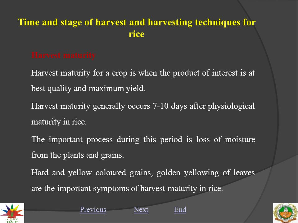 Time and stage of harvest and harvesting techniques for rice Harvest maturity Harvest maturity for a crop is when the product of interest is at best quality and maximum yield.