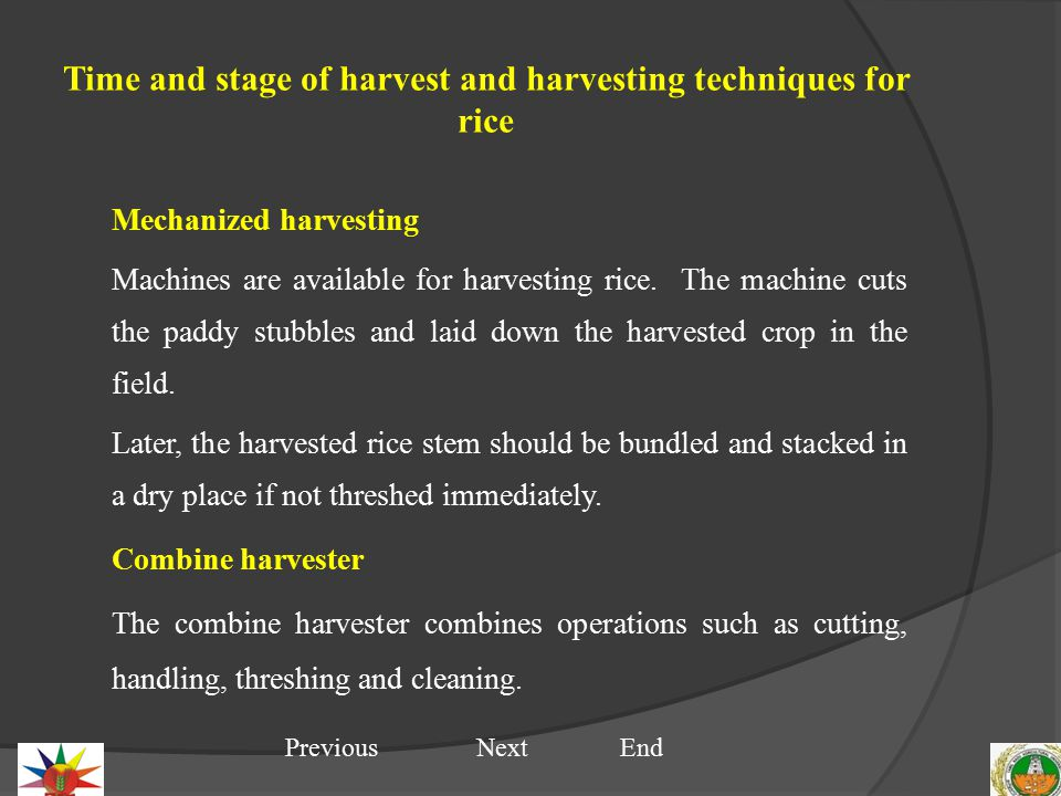 Time and stage of harvest and harvesting techniques for rice Mechanized harvesting Machines are available for harvesting rice.
