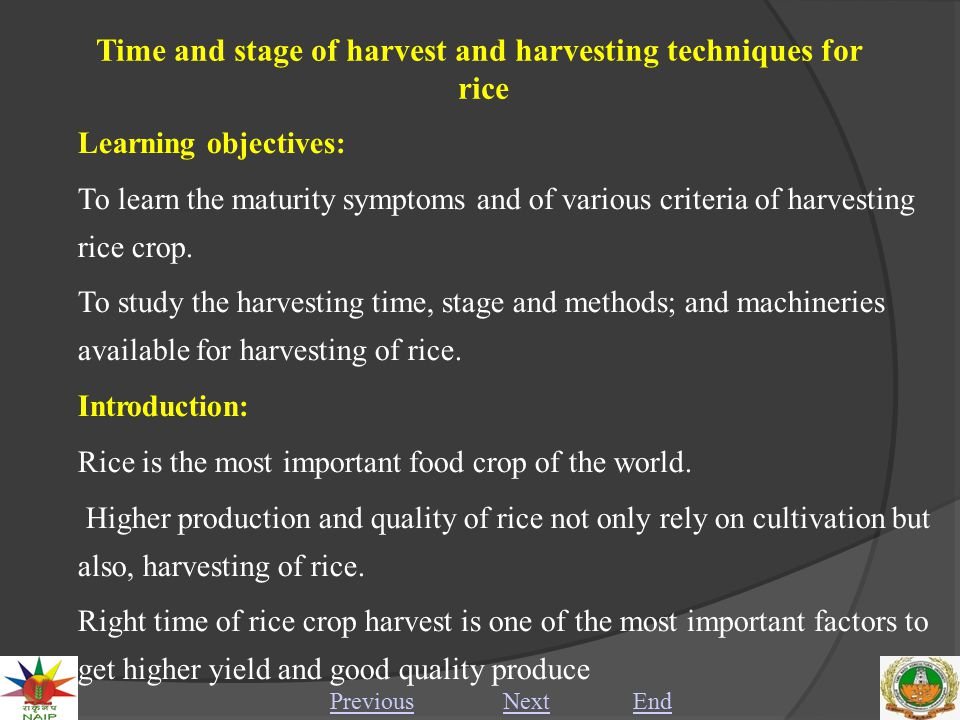 Time and stage of harvest and harvesting techniques for rice Premature or delayed harvest often adversely affects quality of the produce.