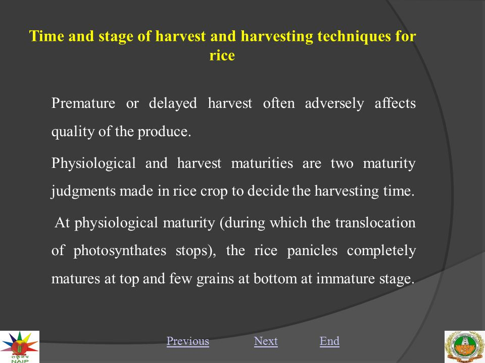 Time and stage of harvest and harvesting techniques for rice III.