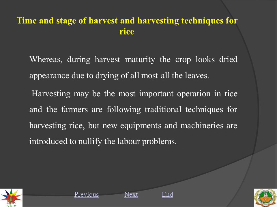 Time and stage of harvest and harvesting techniques for rice I.