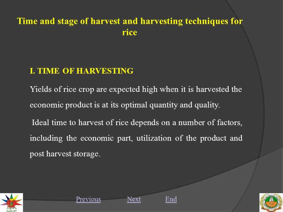 Time and stage of harvest and harvesting techniques for rice Manual harvesting of rice PreviousNextEnd