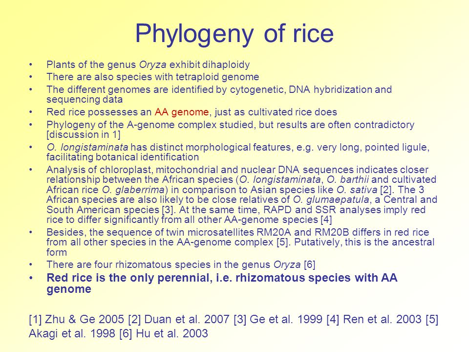 Phylogeny of rice Plants of the genus Oryza exhibit dihaploidy There are also species with tetraploid genome The different genomes are identified by cytogenetic, DNA hybridization and sequencing data Red rice possesses an AA genome, just as cultivated rice does Phylogeny of the A-genome complex studied, but results are often contradictory [discussion in 1] O.