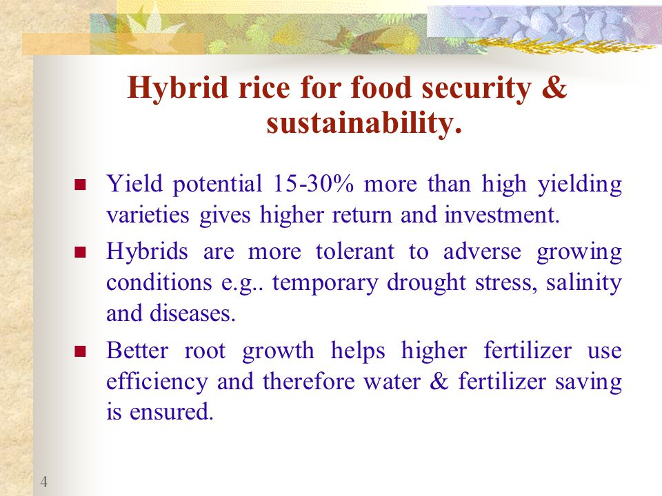 Hybrid rice for food security & sustainability.