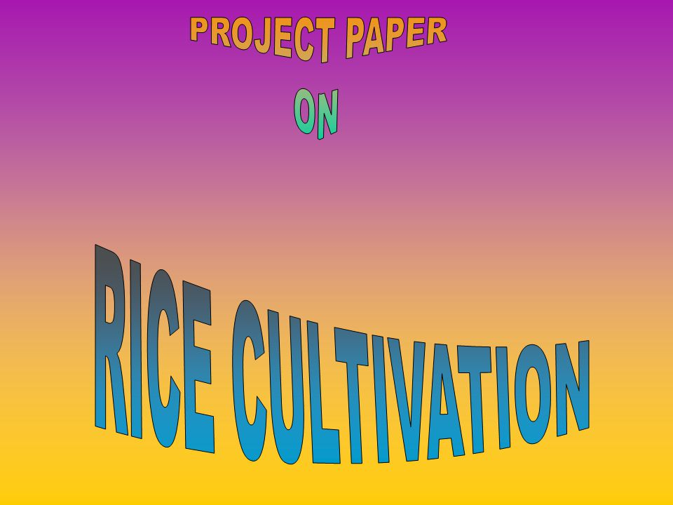 RICE CULTIVATION Introduction : India is an agricultural country.