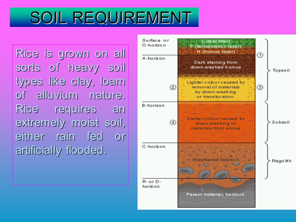 SOIL REQUIREMENT SOIL REQUIREMENT Rice is grown on all sorts of heavy soil types like clay, loam of alluvium nature.