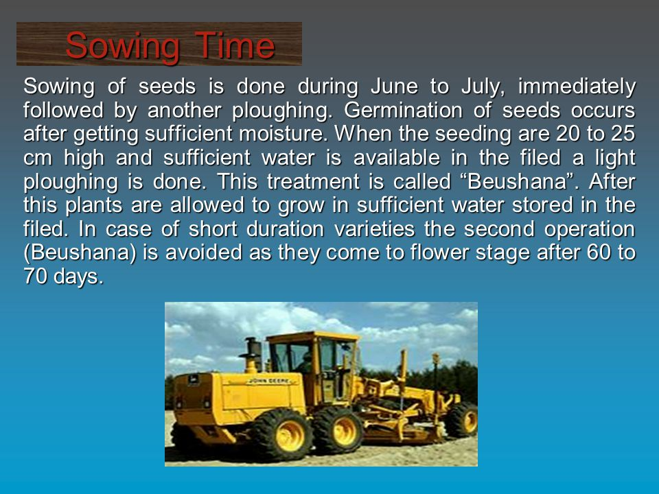 Sowing Time Sowing Time Sowing of seeds is done during June to July, immediately followed by another ploughing.