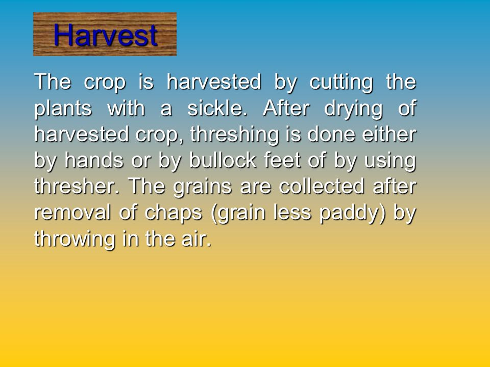 Improved & High yielding varieties for Orissa are as follows, according to their maturity.