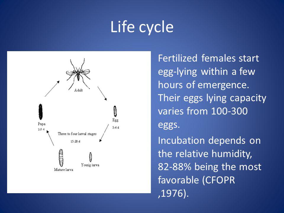 Life cycle Fertilized females start egg-lying within a few hours of emergence.