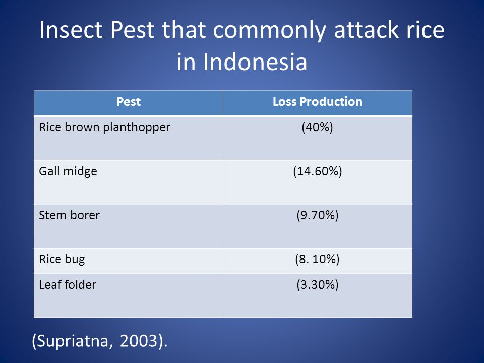 Insect Pest that commonly attack rice in Indonesia (Supriatna, 2003).