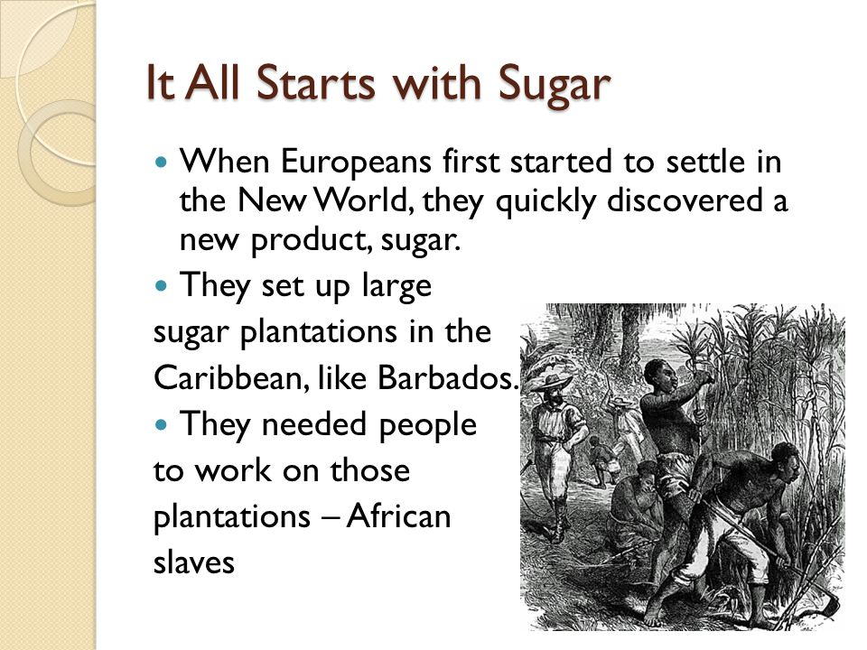 It All Starts with Sugar When Europeans first started to settle in the New World, they quickly discovered a new product, sugar.