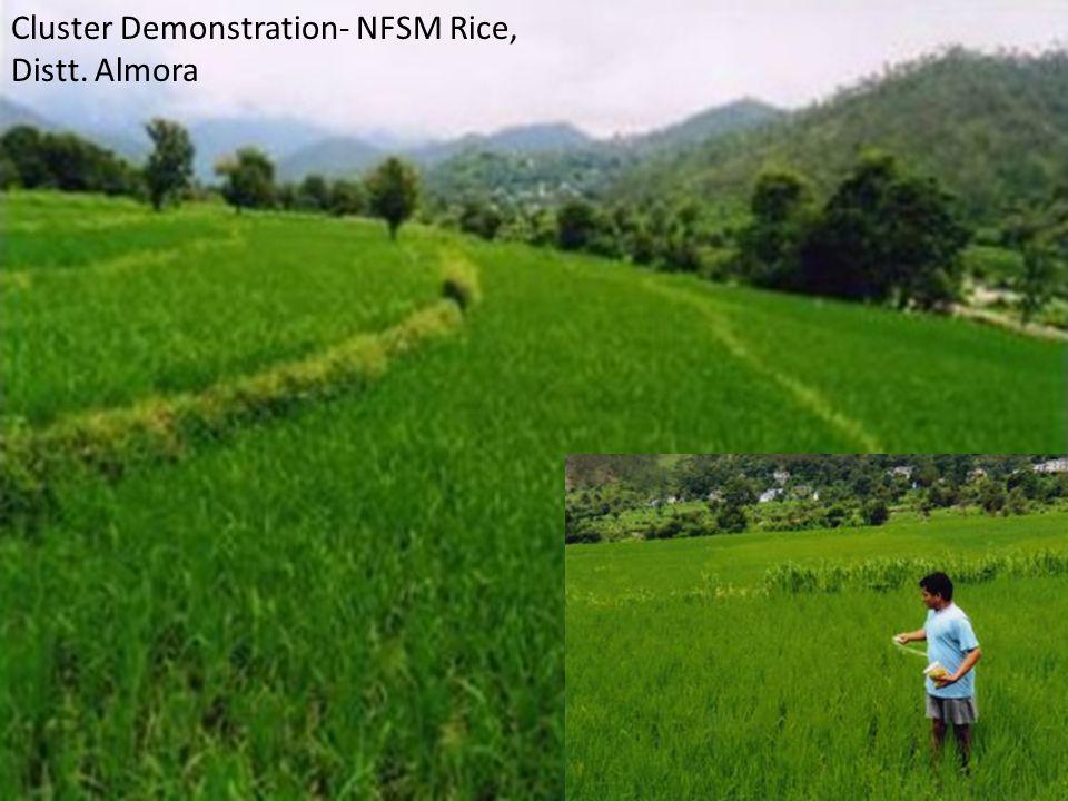 Cluster Demonstration- NFSM Rice, Distt. Almora