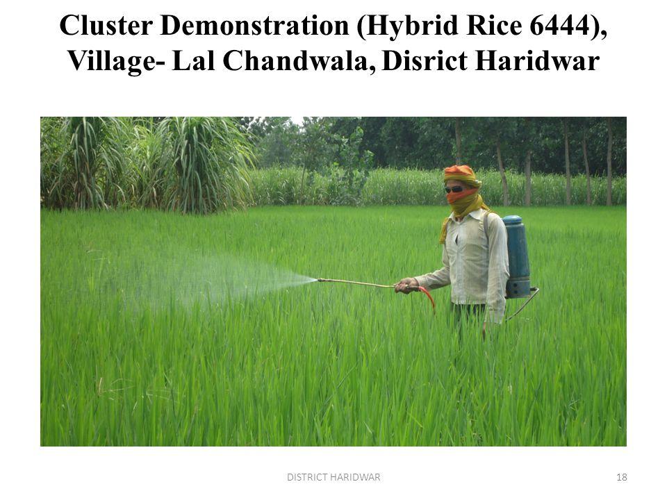 Cluster Demonstration (Hybrid Rice 6444), Village- Lal Chandwala, Disrict Haridwar 18DISTRICT HARIDWAR