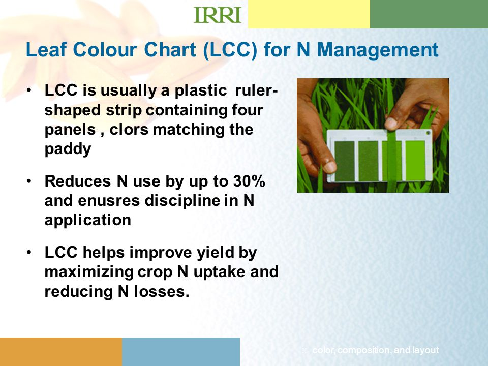 :: color, composition, and layout Leaf Colour Chart (LCC) for N Management LCC is usually a plastic ruler- shaped strip containing four panels, clors matching the paddy Reduces N use by up to 30% and enusres discipline in N application LCC helps improve yield by maximizing crop N uptake and reducing N losses.