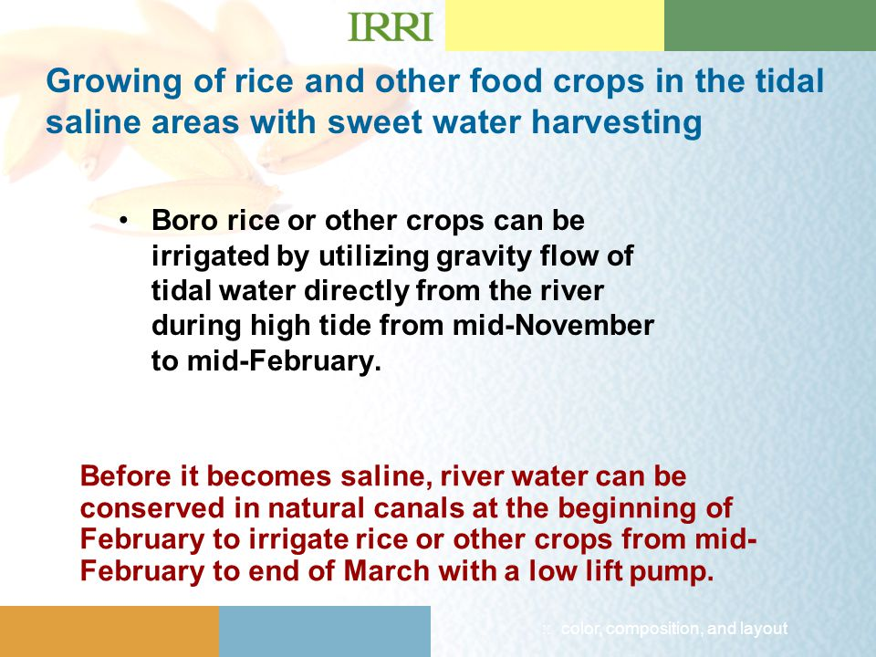 :: color, composition, and layout Growing of rice and other food crops in the tidal saline areas with sweet water harvesting Boro rice or other crops can be irrigated by utilizing gravity flow of tidal water directly from the river during high tide from mid-November to mid-February.