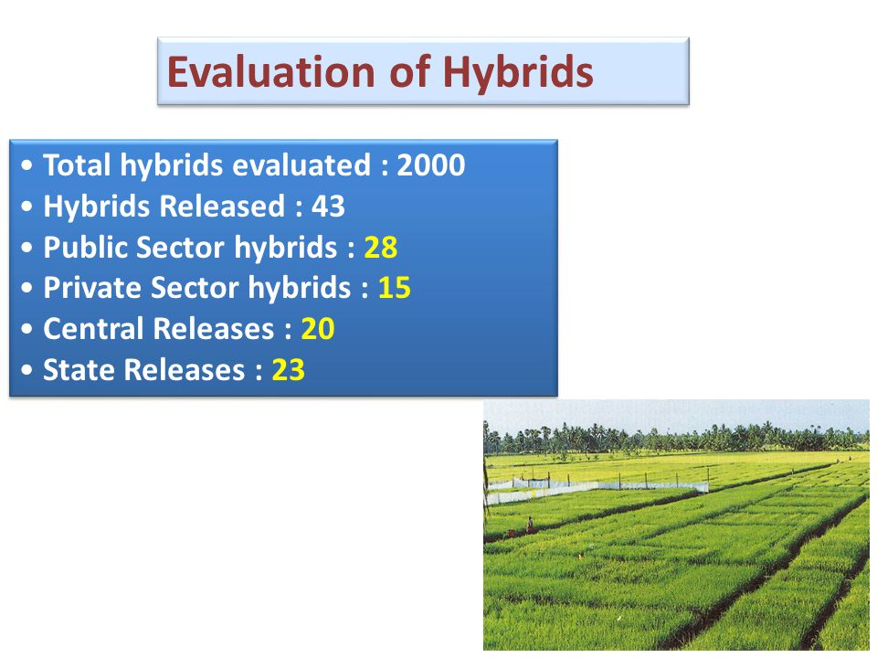 Total hybrids evaluated : 2000 Hybrids Released : 43 Public Sector hybrids : 28 Private Sector hybrids : 15 Central Releases : 20 State Releases : 23 Total hybrids evaluated : 2000 Hybrids Released : 43 Public Sector hybrids : 28 Private Sector hybrids : 15 Central Releases : 20 State Releases : 23 Evaluation of Hybrids